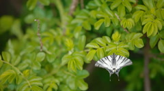 A white butterfly on a leaf Stock Footage