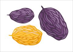 Vector raisins, Dodo collection - stock illustration