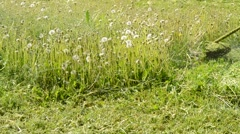 Mowing the lawn mower close up Stock Footage