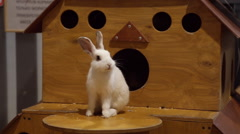 White rabbit in the petting zoo Stock Footage
