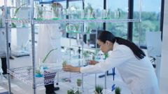 4K Scientific research team analyzing plant samples in laboratory - stock footage