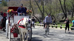 Central Park Sightseeing with the Horse-Drawn Carriage Rides. NYC, USA Stock Footage