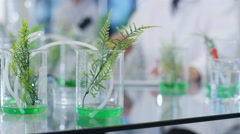 4K Biology research scientist working in lab & analyzing plant samples Stock Footage