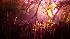 4K Romantic Autumn Morning in Small Garden 3 stylized Stock Footage