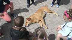 Children see a homeless dog lying on the pavement Stock Footage