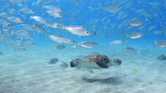 Underwater - reef - turtle  - Diving - Curacao - Caribbean - 4K Stock Footage