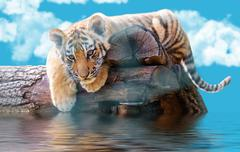 small tiger on a log swims - stock photo