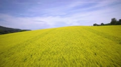 Aerial drone shot of a rapeseed field Stock Footage