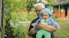 Grandfather showing grandson vine. Beautiful baby smiling and touching plant Stock Footage