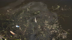 Dead fish and debris floating in the river Volga - stock footage