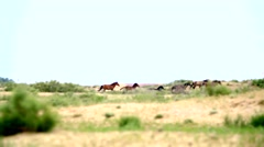 Herd of horses running on the steppes. Slow motion Stock Footage