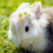 Bunny with flowers Stock Photos
