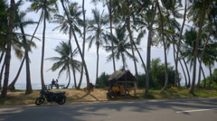 KING COCONUT HUT PAM TREES MIDIGAMA SRI LANKA Stock Footage