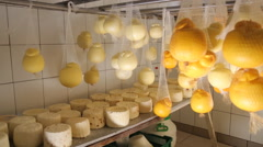 Cheese hanging on the plant Stock Footage