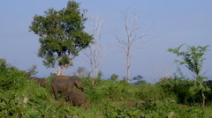 ASIAN ELEPHANTS UDAWALAWE SAFARI PARK SRI LANKA Stock Footage