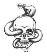 Snake and Skull Engraving Illustration - stock illustration