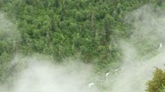 Wood mist shrouded, China Stock Footage