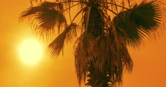 Tropical sunset. Palm tree at sunset sky. Timelapse of palm tree at sunset Arkistovideo