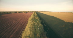 4k aerial view. Low flight over green and yellow wheat rural field - stock footage