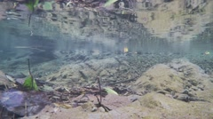 The underwater world in a small river. Reflection of water Stock Footage