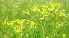 Green fields with grass and flower Stock Footage