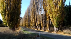 Autumn avenue of poplar trees with red truck. Stock Footage