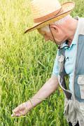 Farmer inspecting crops Stock Photos