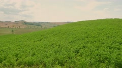 Aerial Drone shot of a field Stock Footage