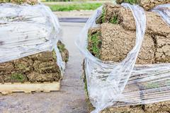 Pallet of sod rolls are wrapped in foil, unrolling grass Stock Photos