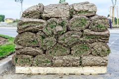 Heap of sod rolls for installing new lawn, unrolling grass Stock Photos