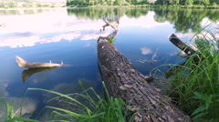 A large dead tree fell in water of pond . Stock Footage