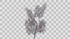 Fan Coral Plant Growth Animation Stock Footage