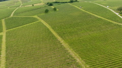 Aerial view of vineyards Stock Footage