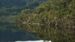 Panning shot of temperate rain forest on the gordon river in tasmania Stock Footage