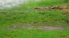 Happy Child Jumping In Muddy Puddle Stock Footage
