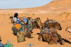 Berber is preparing a caravan in the way Stock Photos