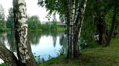 Birches in the Russian Village Pond - stock footage