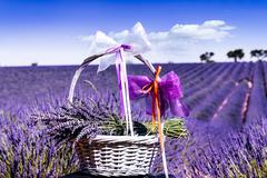 Lavender spirit Stock Photos