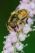 Bee resting Stock Photos