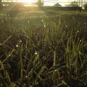 Bright Morning Grass - stock photo