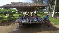 KEEPING FRESH FISH WET STALL WELIGAMA SRI LANKA Stock Footage
