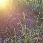 Wet Morning Grass - stock photo