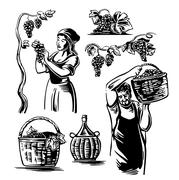 Men and women harvest the grapes in the vineyard. Black and white vintage vector Stock Illustration