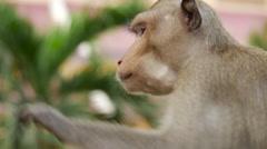 Monkey eats the banana Stock Footage