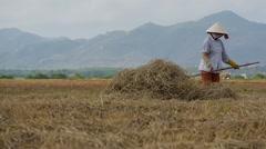 Vietnamese farmer working in the field 2 Stock Footage