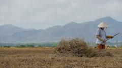 Vietnamese farmer working in the field 4 Stock Footage