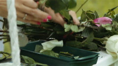 Women's hands are cut flowers red and white roses Stock Footage