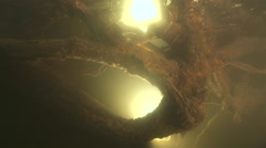 Underwater root tree illuminated  with backlight Stock Footage
