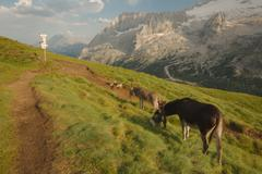 Grazing Donkey in the alp - stock photo