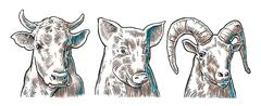 Farm animals icon set. Pig, cow and goat heads isolated on white background Piirros